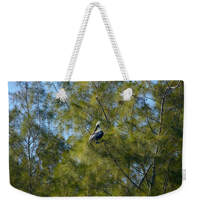 Pelican Weekender Tote Bag featuring the photograph Brown Pelican In The Trees by Denise Mazzocco