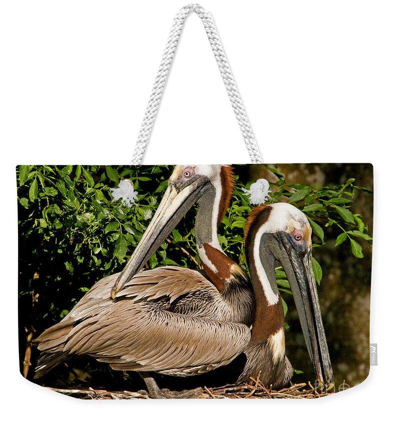 Brown Pelican Weekender Tote Bag featuring the photograph Brown Pelican by Millard H. Sharp
