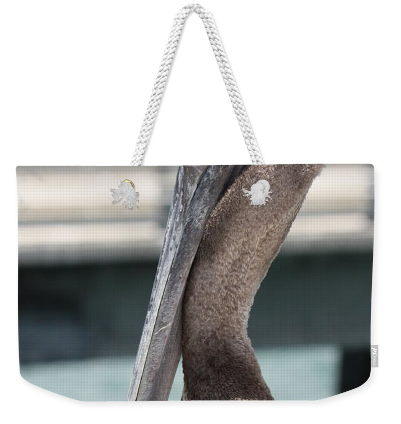 Bird Weekender Tote Bag featuring the photograph Brown Pelican Portrait by Carol Groenen