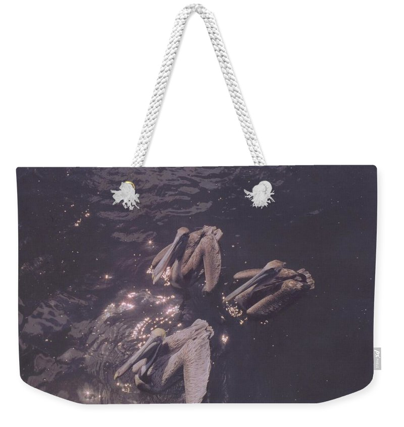 Begging For Fish Weekender Tote Bag featuring the photograph Brown Pelicans by Robert Floyd