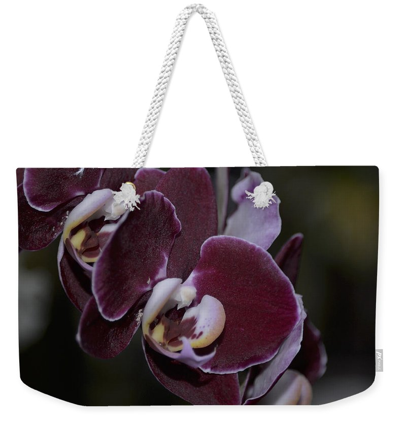 Orchid Weekender Tote Bag featuring the photograph Brown Phal by Terri Winkler