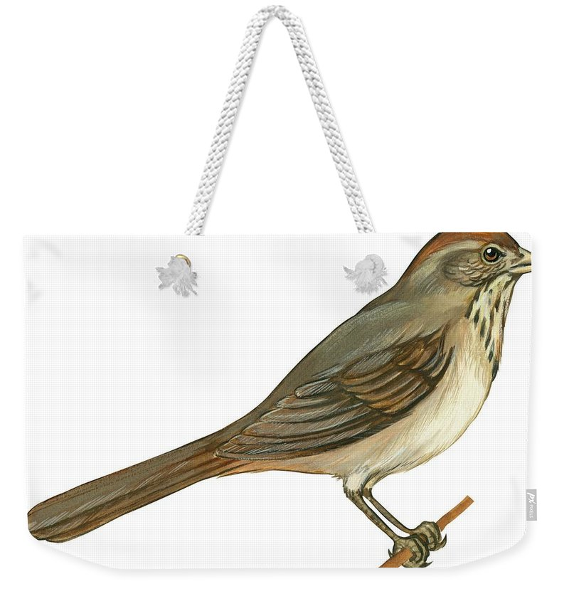 No People; Horizontal; Side View; Full Length; White Background; One Animal; Wildlife; Close Up; Illustration And Painting; Zoology; Bird; Branch; Wing; Feather; Perching; Beak; Tail; Brown; Brown Towhee; Pipilo Fuscus Weekender Tote Bag featuring the drawing Brown Towhee by Anonymous