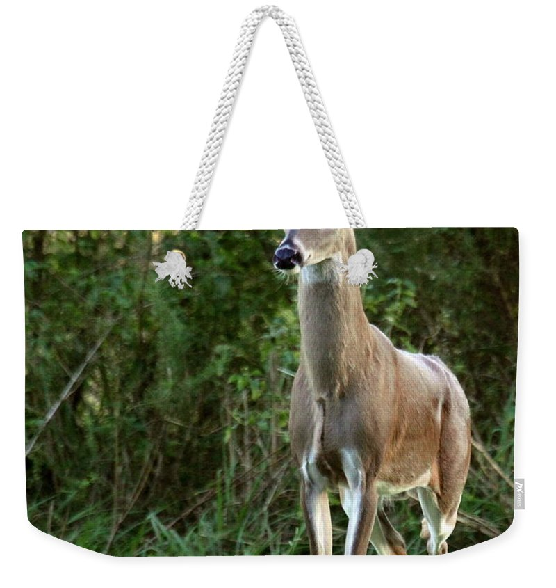 Deer Weekender Tote Bag featuring the photograph Buck In The Meadow by Myrna Bradshaw