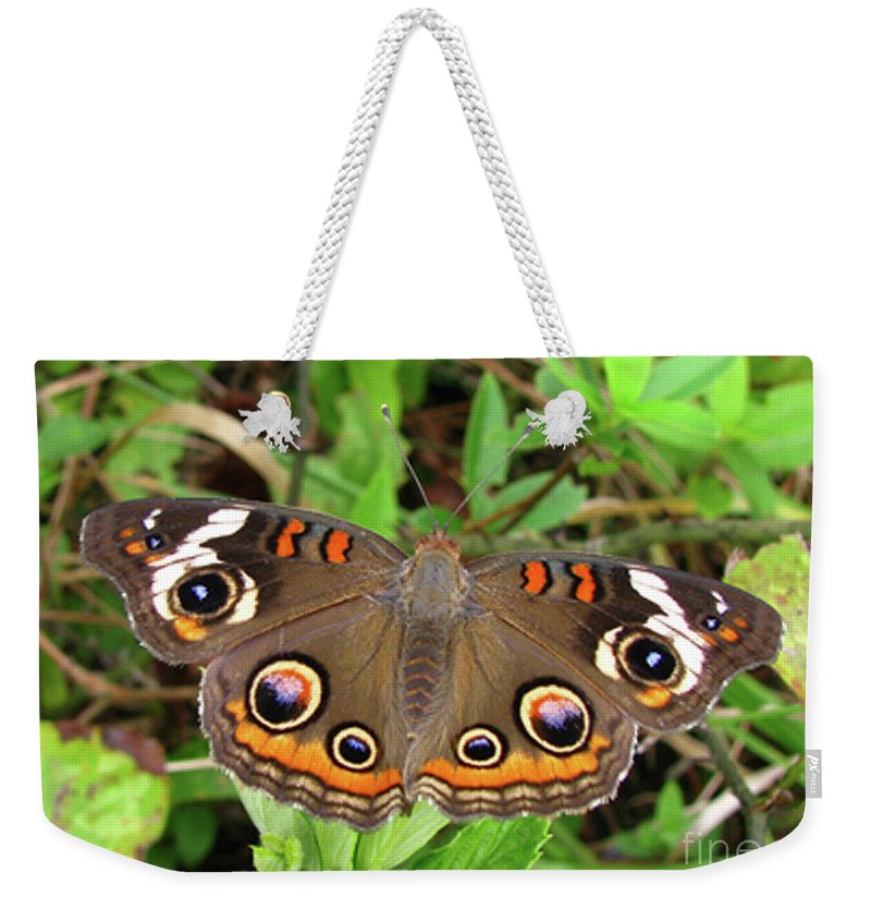 Butterfly Weekender Tote Bag featuring the photograph Buckeye Butterfly by Donna Brown
