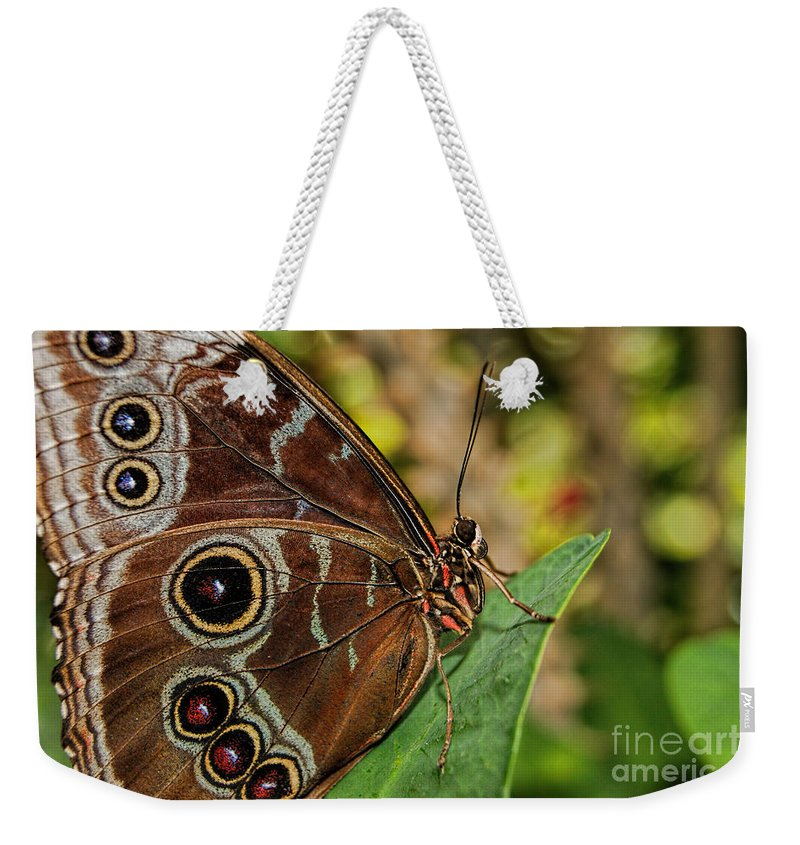 Blue Morpho Butterfly Weekender Tote Bag featuring the photograph Blue Morpho Butterfly by Olga Hamilton