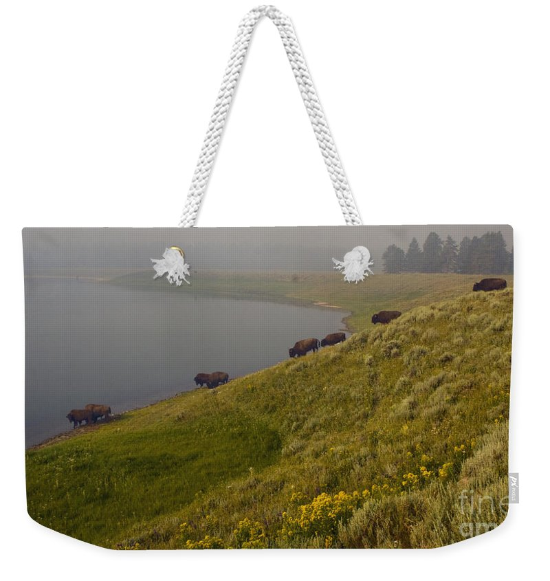 Bovidae Bison Weekender Tote Bag featuring the photograph Buffalo  #0237 by J L Woody Wooden