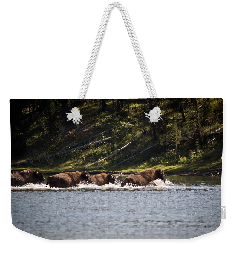 Buffalo Weekender Tote Bag featuring the photograph Buffalo Crossing - Yellowstone National Park - Wyoming by Diane Mintle