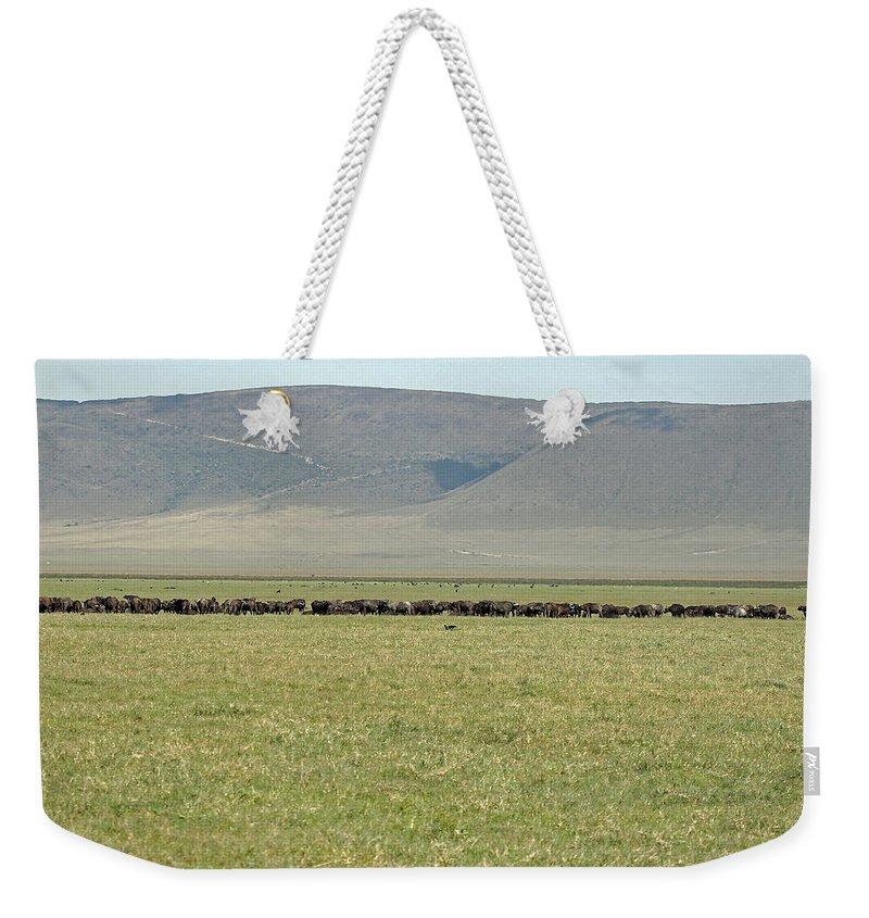 Cape Buffalo Weekender Tote Bag featuring the photograph Buffalo Herd by Tony Murtagh
