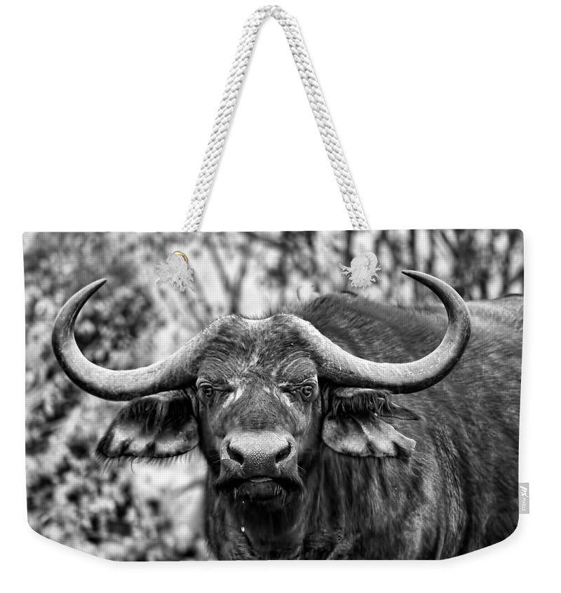 Buffalo Weekender Tote Bag featuring the photograph Buffalo Stare In Black And White by Amanda Stadther