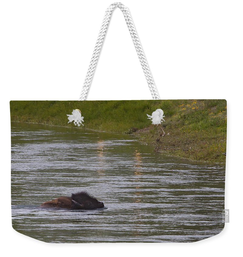 Buffalo Weekender Tote Bag featuring the photograph Buffalo Swimming  #7087 by J L Woody Wooden