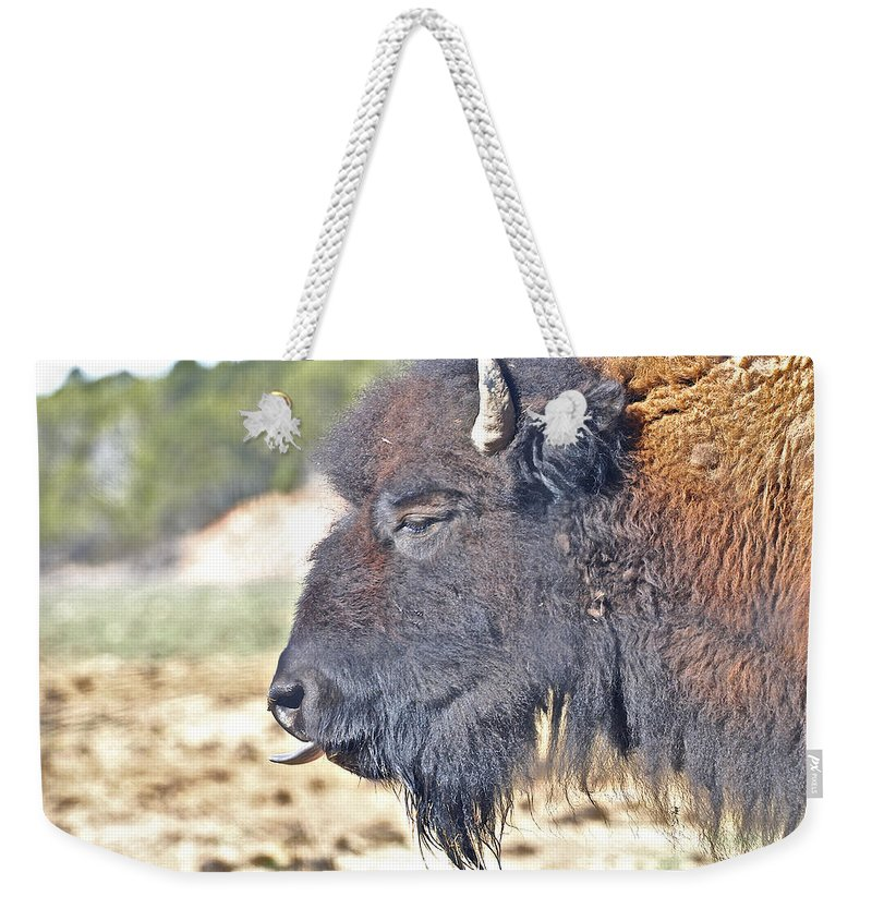 Animals Weekender Tote Bag featuring the photograph Buffalo Tongue by SC Heffner