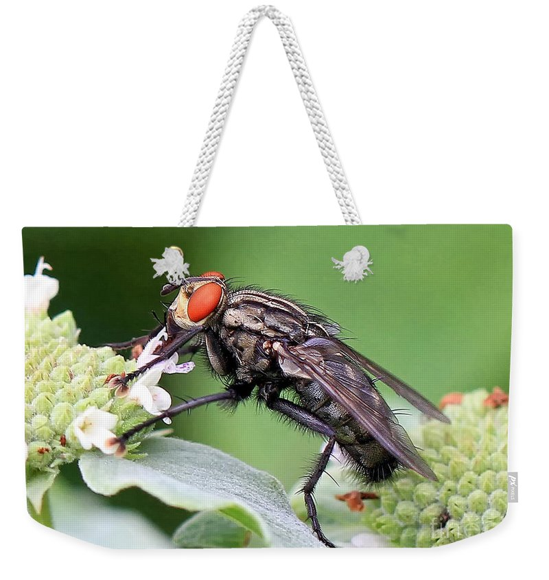 Bugs Weekender Tote Bag featuring the photograph Bugeyed by Geoff Crego