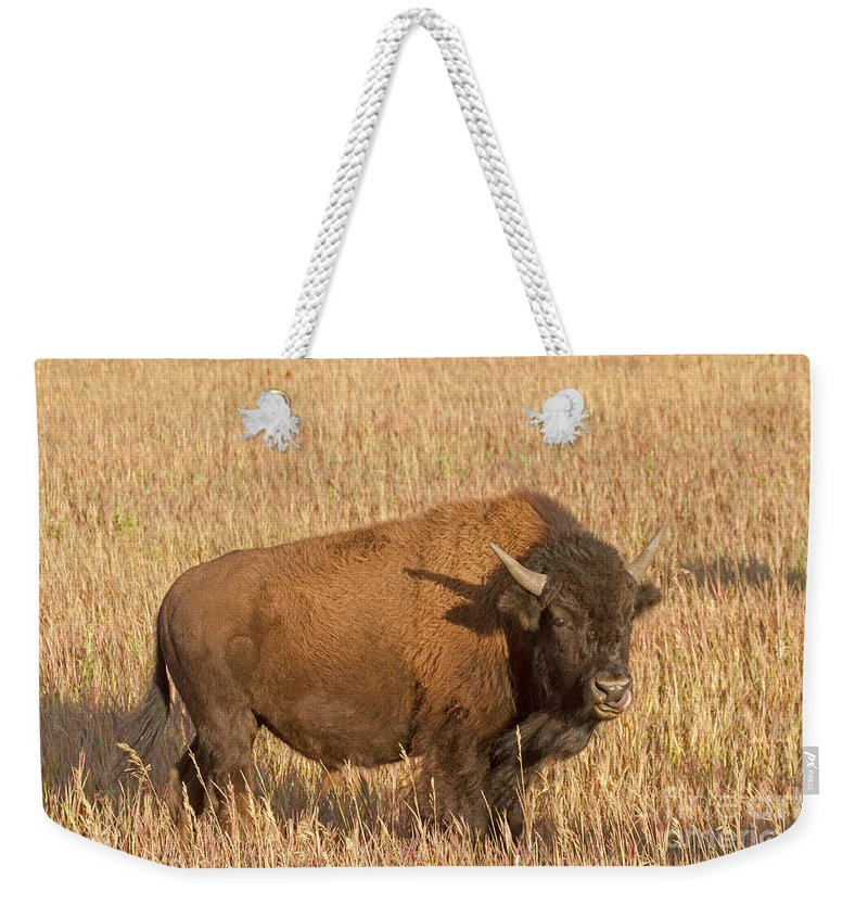 Animal Weekender Tote Bag featuring the photograph Bull Bison At The Elk Ranch Grand Teton National Park by Fred Stearns