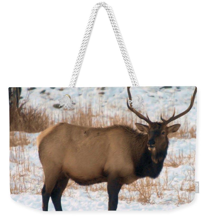 Elk Weekender Tote Bag featuring the photograph Bull Elk by Jeff Swan