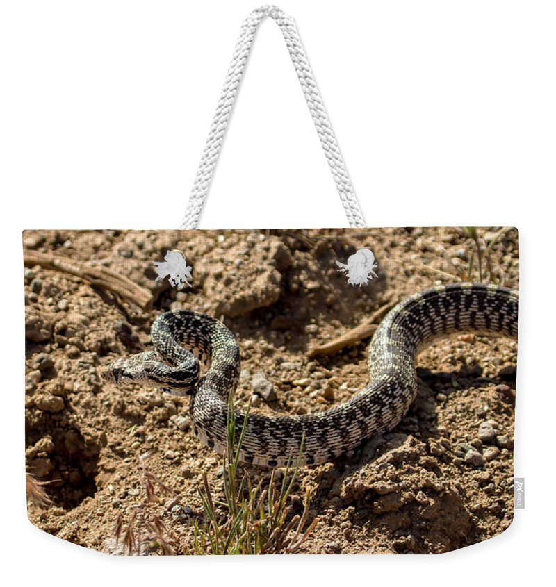 Pituophis Catenifer Weekender Tote Bag featuring the photograph Bull Snake by Robert Bales