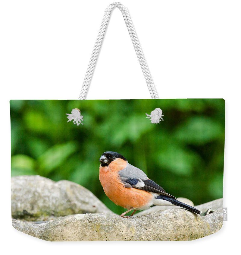 Bullfinch Weekender Tote Bag featuring the photograph Bullfinch by Scott Carruthers