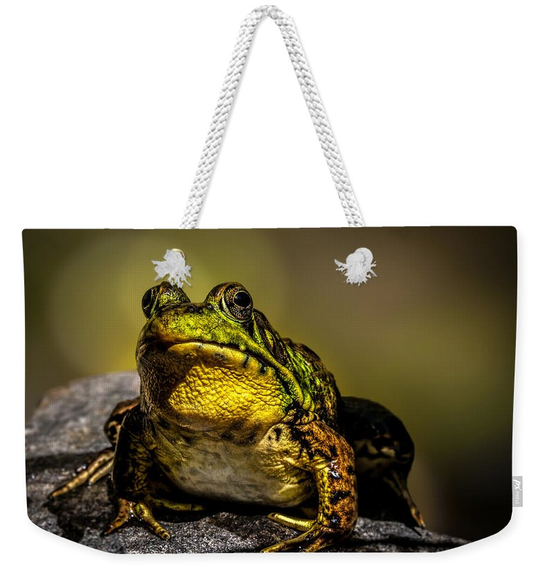 Frog Weekender Tote Bag featuring the photograph Bullfrog Watching by Bob Orsillo