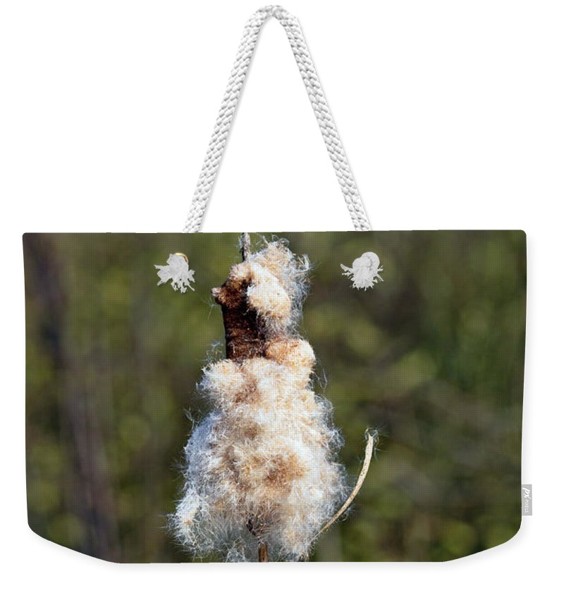 Bright Weekender Tote Bag featuring the photograph Bulrush Seed Head Disintegrating by Rod Johnson