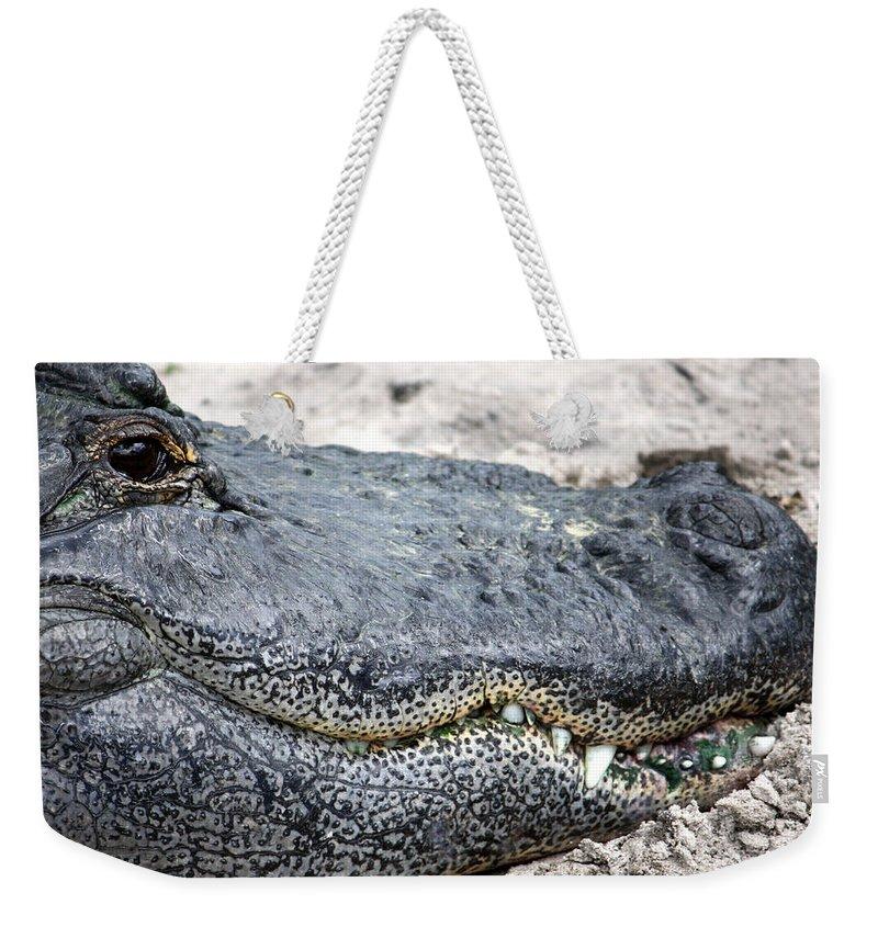 Busch Gardens Weekender Tote Bag featuring the photograph Busch Gator by David Nicholls