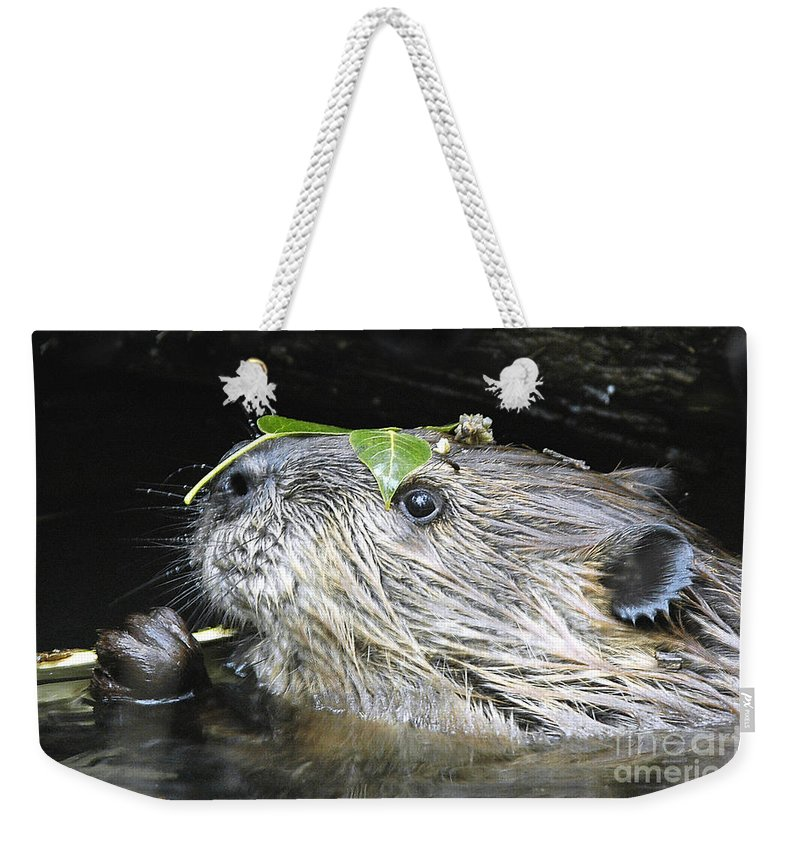 Beaver Weekender Tote Bag featuring the photograph Busy Beaver by Gary Beeler