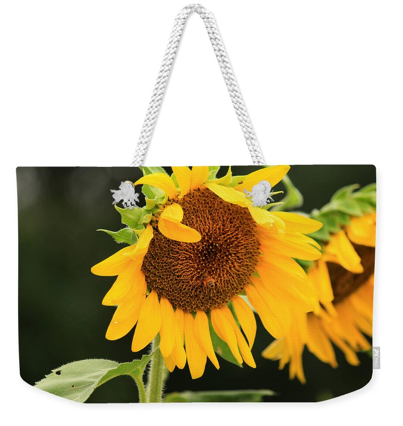 Sunflowers Weekender Tote Bag featuring the photograph Busy Bee by Amy Warr