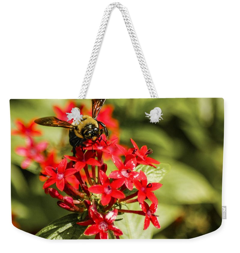 Bee Weekender Tote Bag featuring the photograph Busy Bee by Carolyn Marshall