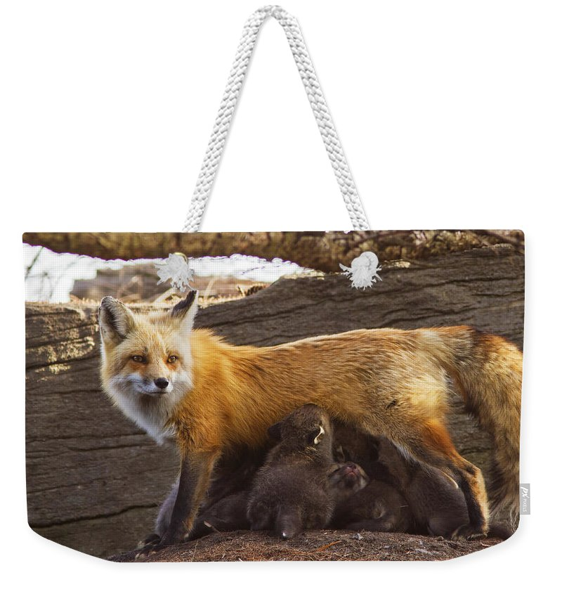 Fox Weekender Tote Bag featuring the photograph Busy Mommy by Mircea Costina Photography