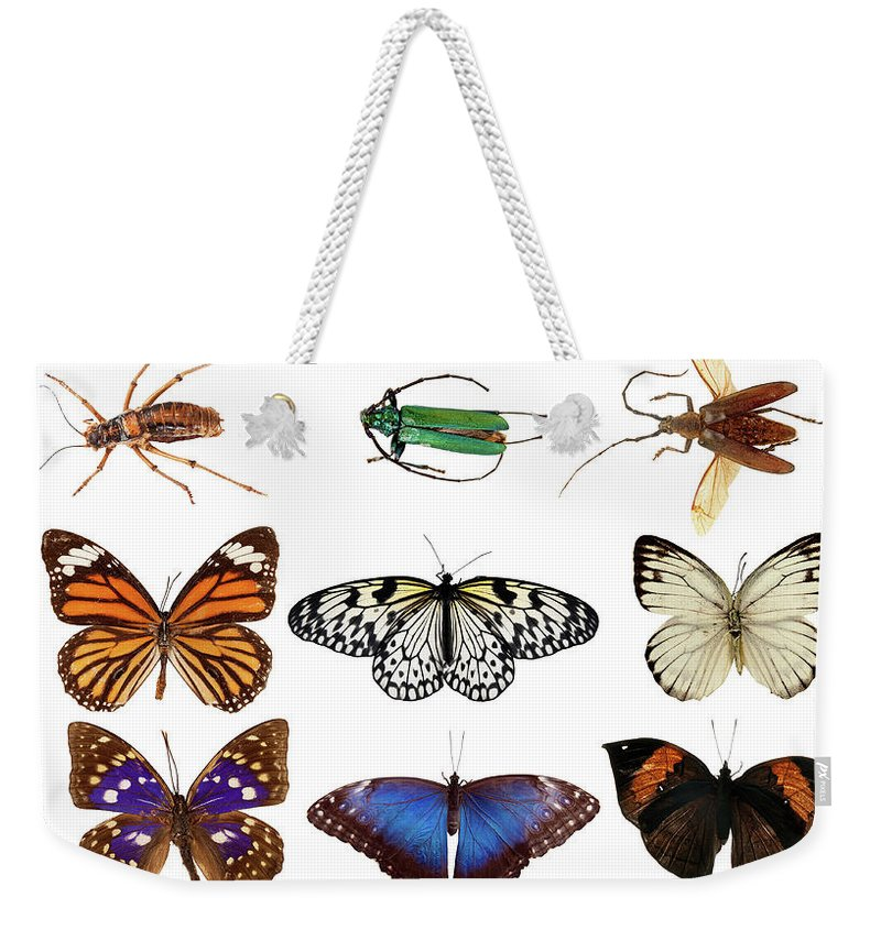 Common Blue Butterfly Weekender Tote Bag featuring the photograph Butterflies And Beetles by Mashabuba