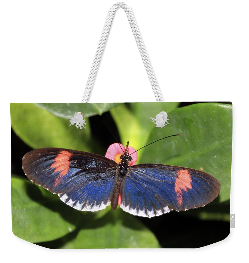 Butterfly Weekender Tote Bag featuring the photograph Key West Butterfly 3 by Bob Slitzan