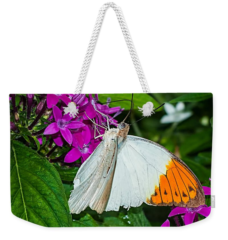 White Weekender Tote Bag featuring the photograph Butterfly 63 by Photos By Cassandra