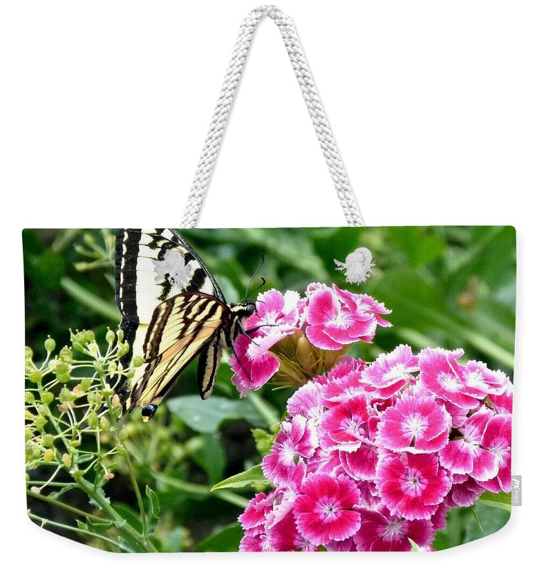 Butterfly Weekender Tote Bag featuring the photograph Butterfly And Sweet Williams by Will Borden