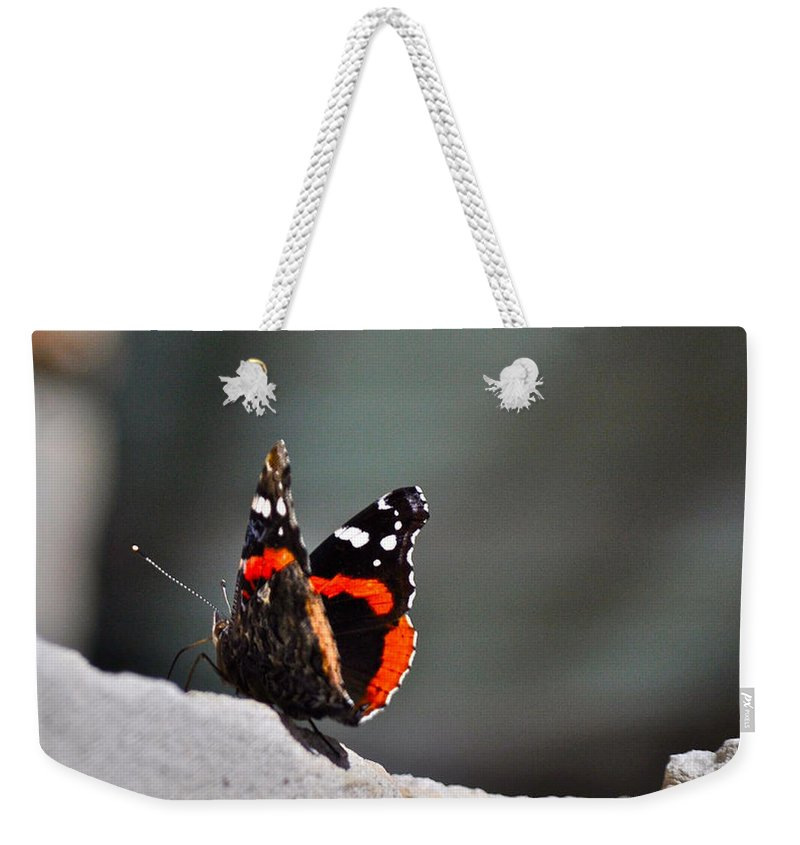 Butterfly Photograph Weekender Tote Bag featuring the photograph Butterfly Landing by Kristina Deane