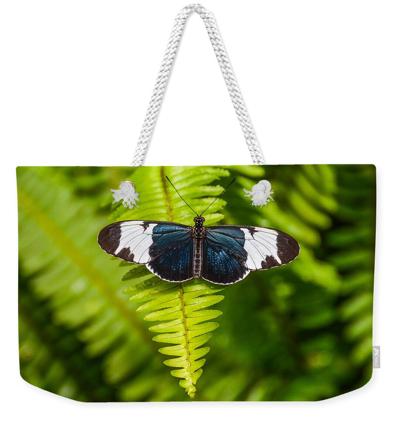 Butterfly Weekender Tote Bag featuring the photograph Butterfly On Fern by Michael Moriarty