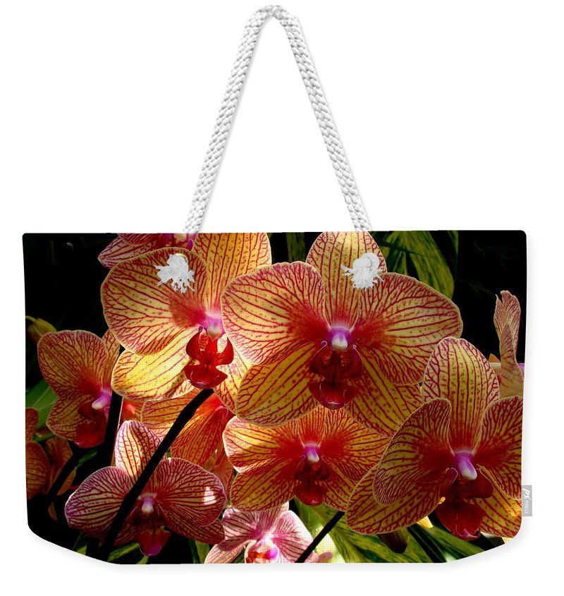 Flowers Weekender Tote Bag featuring the photograph Butterfly Orchids by Rodney Lee Williams