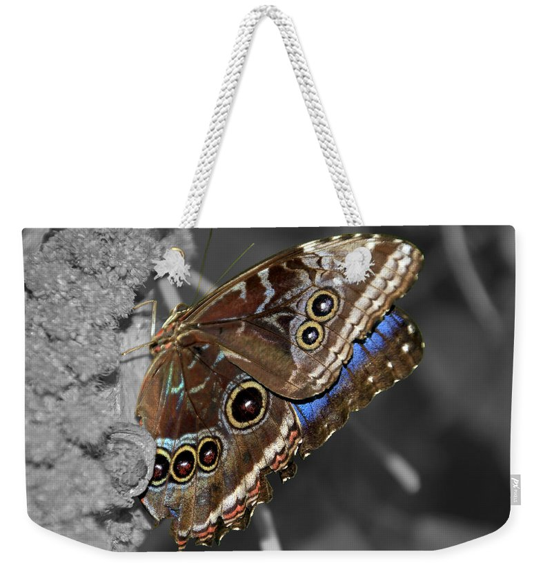 Macro Weekender Tote Bag featuring the photograph Butterfly Spot Color 1 by Bob Slitzan