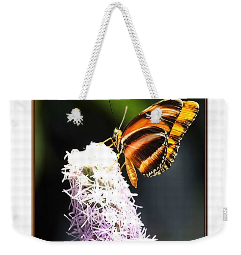 Nature Photograph Weekender Tote Bag featuring the photograph Butterfly by Tom Prendergast