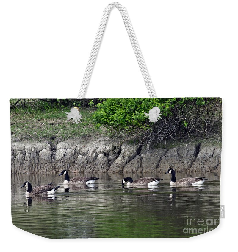 Cackling Geese Weekender Tote Bag featuring the photograph Cackling Geese 2 by Sharon Talson