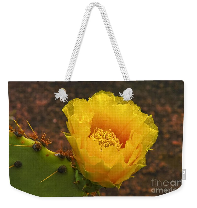 Inks Lake State Park Texas Prickly Pear Cactus Flower Cacti Flowers Bloom Blooms Blossom Blossom Spine Spines Still Life Spring Weekender Tote Bag featuring the photograph Cactus Bloom by Bob Phillips