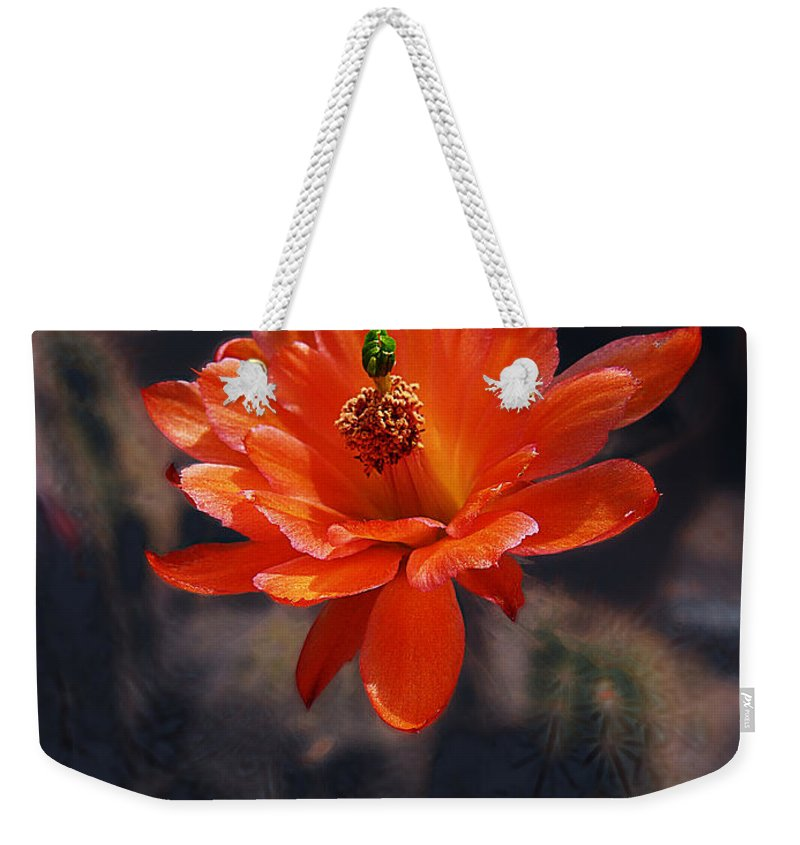Echinocereus Weekender Tote Bag featuring the photograph Cactus Blossom 1 by Xueling Zou