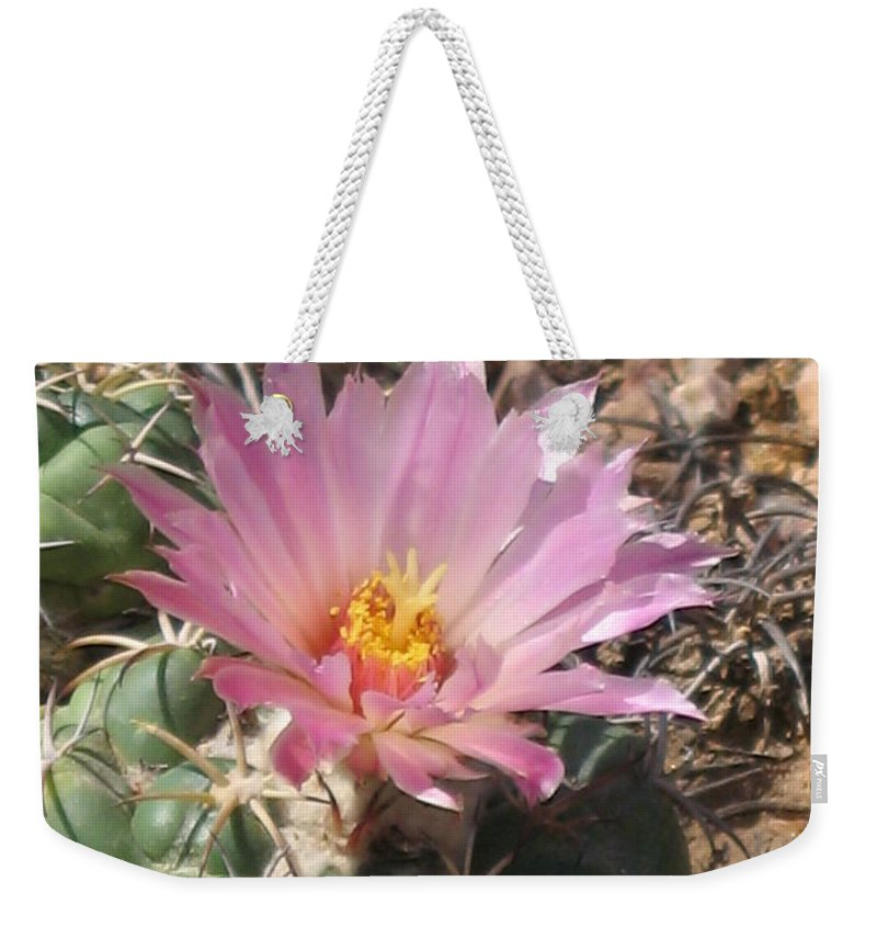 Pink Cactus Flower Weekender Tote Bag featuring the photograph Cactus Flower by Christiane Schulze Art And Photography
