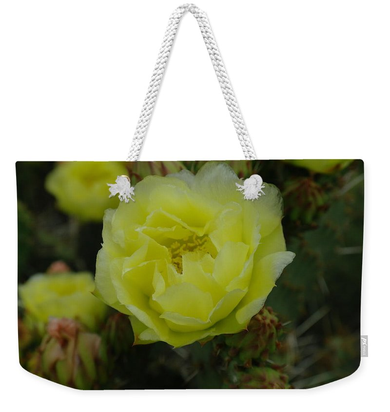 Flowers Weekender Tote Bag featuring the photograph Cactus Flower by Jeff Swan