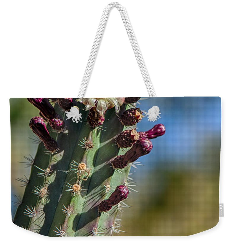 Fred Larson Weekender Tote Bag featuring the photograph Cactus In Bloom by Fred Larson