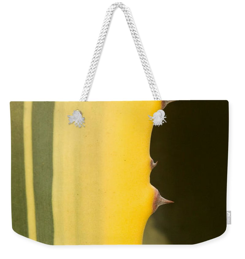 Cactus Weekender Tote Bag featuring the photograph Cactus Spines 1 by Douglas Barnett