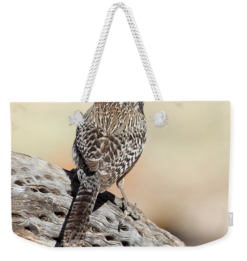Cactus Wren Weekender Tote Bag featuring the photograph Cactus Wren by Bryan Keil