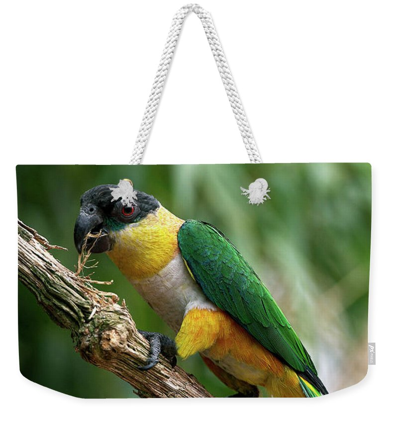 Adult Weekender Tote Bag featuring the photograph Caique A Tete Noire Pionites by Gerard Lacz