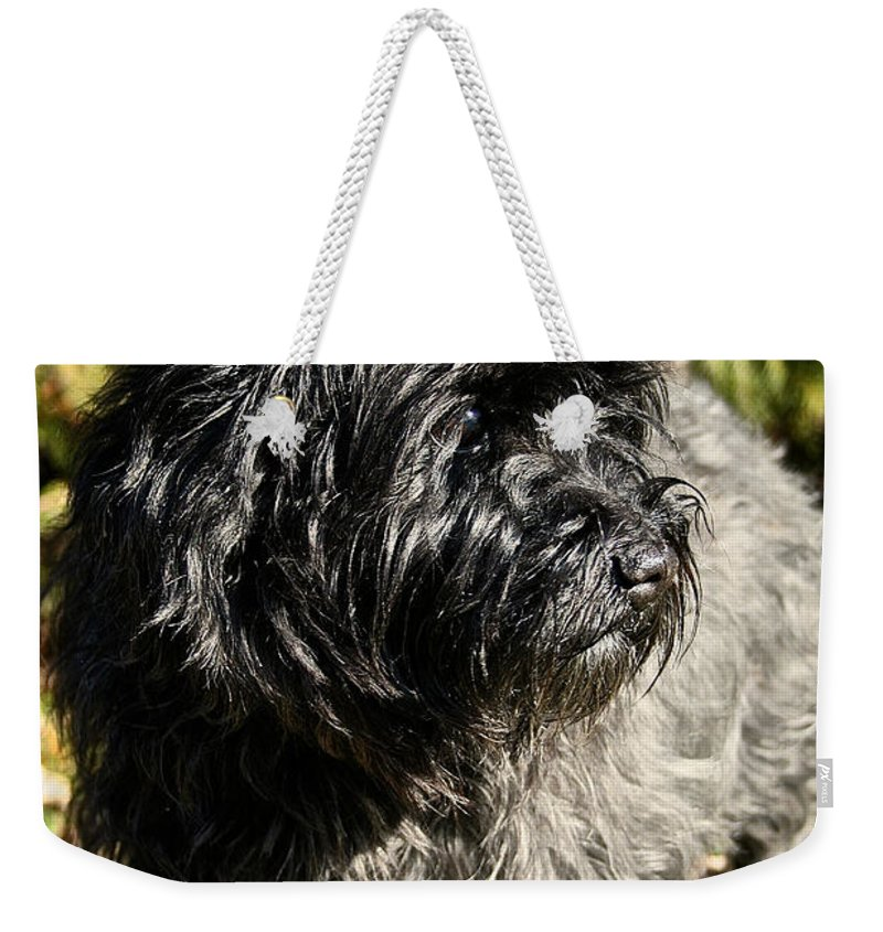 Dog Weekender Tote Bag featuring the photograph Cairn Terrier Portrait by Susan Herber