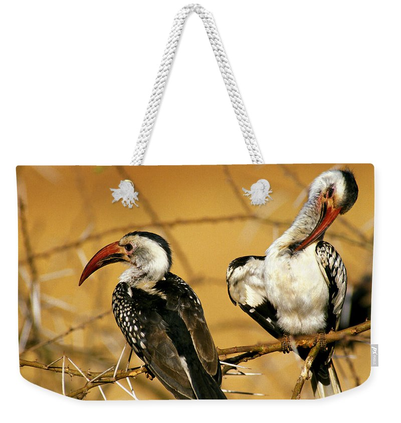Acacia Tree Weekender Tote Bag featuring the photograph Calao A Bec Rouge Tockus Erythrorhynchus by Gerard Lacz