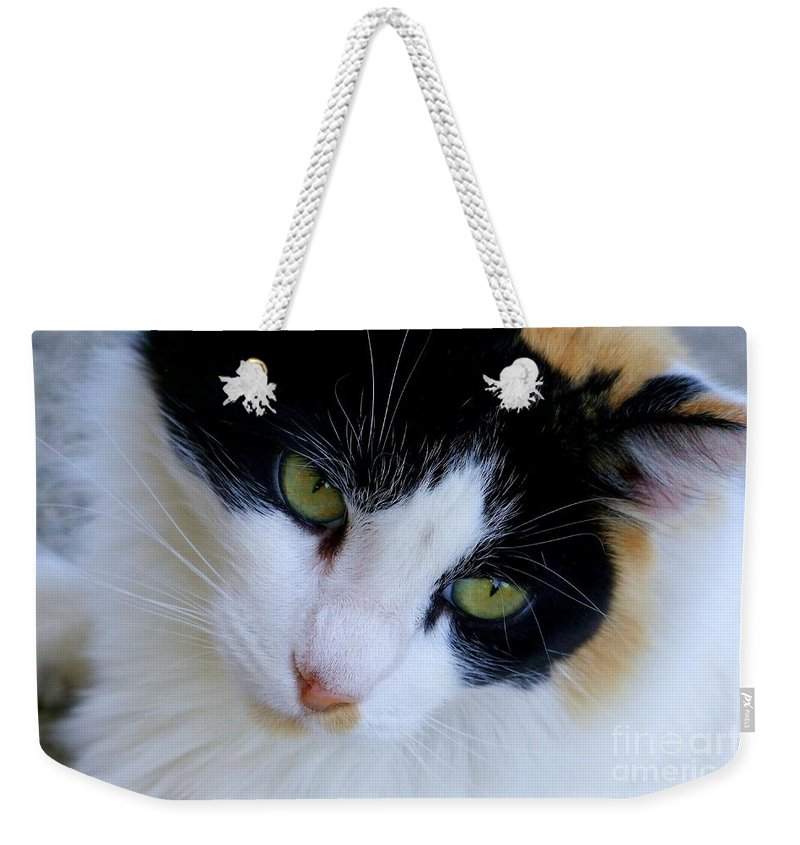 White Weekender Tote Bag featuring the photograph Calico 1 by Mary Deal