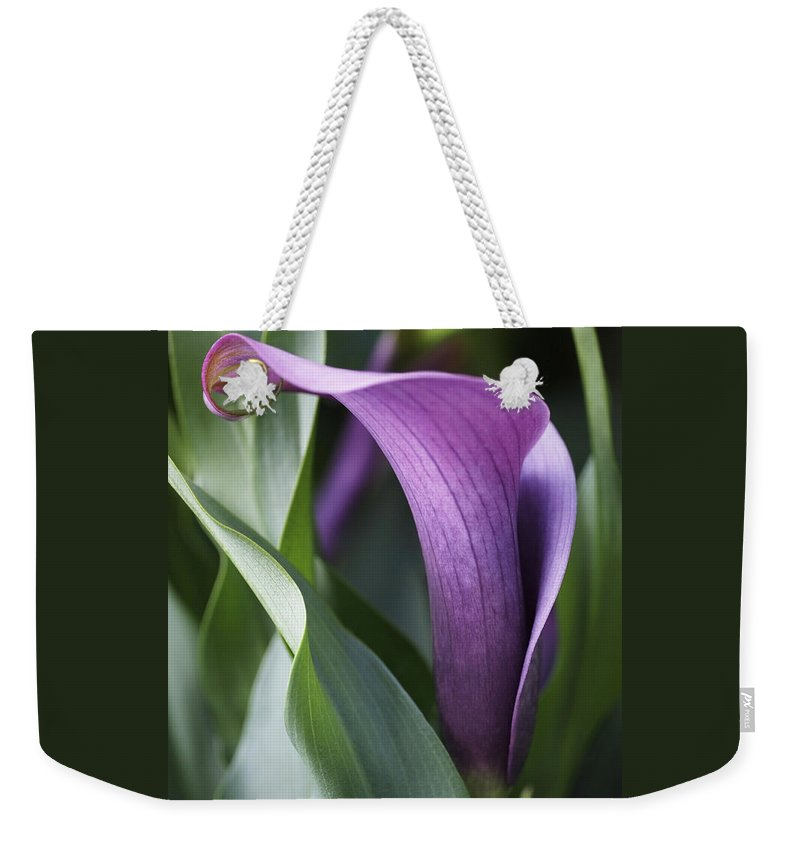 Lily Weekender Tote Bag featuring the photograph Calla Lily in Purple Ombre by Rona Black