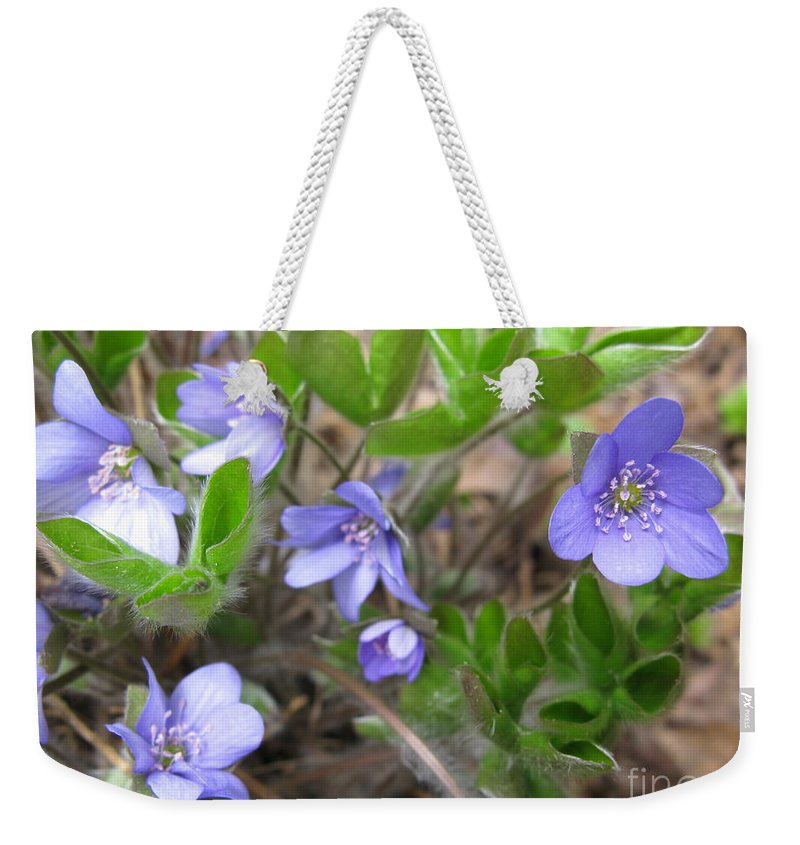 Early Spring Weekender Tote Bag featuring the photograph Calling Spring by Ausra Huntington nee Paulauskaite